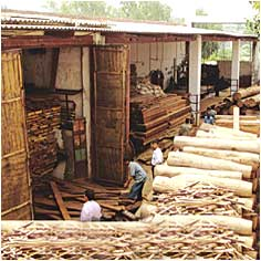 Timber Traders